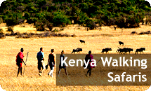 Walking Safaris In Kenya